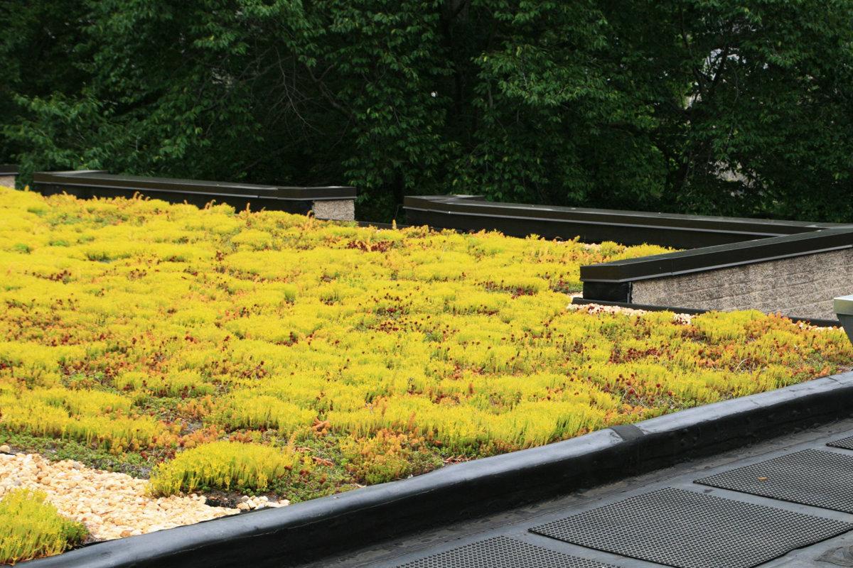groendak plaatsen met vetplanten